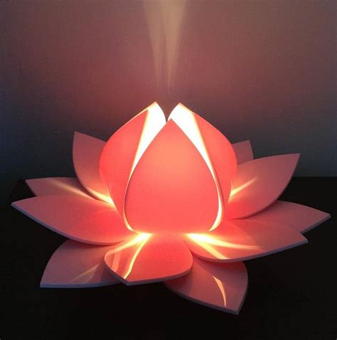 lotus flower touch l lotus flower photoped flowers ideas