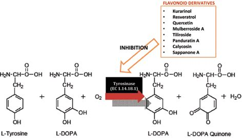 L Assay by Flavonoid Derivatives As Potent Tyrosinase Inhibitors A