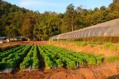 wann mais ernten brokkoli pflanzen 187 wann wie gelingt es am besten