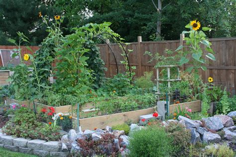 backyard gardener beauty in the vegetable garden my northern garden