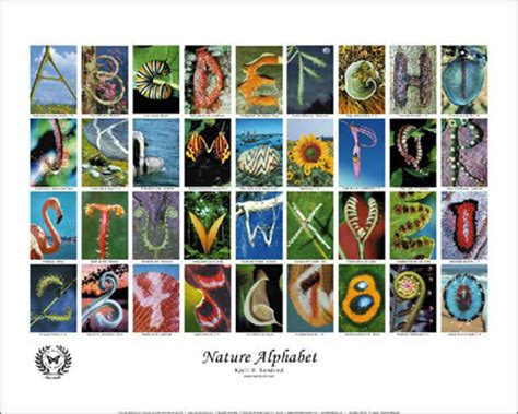 free printable nature alphabet letters butterfly posters books prints gifts