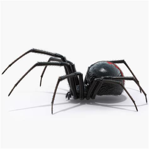Black Widow Spider 3d Model 3d Spider