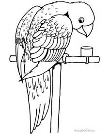 parrot coloring page bird coloring pages free printable pictures