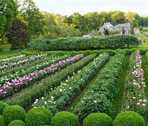 17 Best Images About Martha Stewart S Garden Farm On Martha Stewart Vegetable Garden