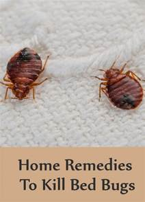 what home remedy kills bed bugs 8 home remedies to kill bed bugs search home remedy
