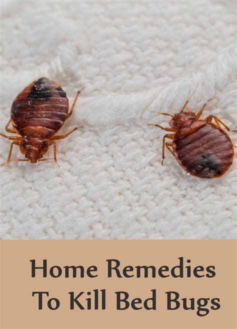 home remedies for killing bed bugs bedding sets