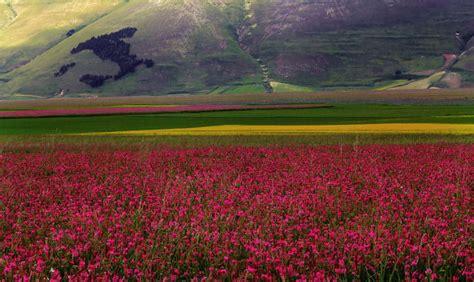 fiorita castelluccio di norcia la fioritura di castelluccio di norcia spettacolo umbro