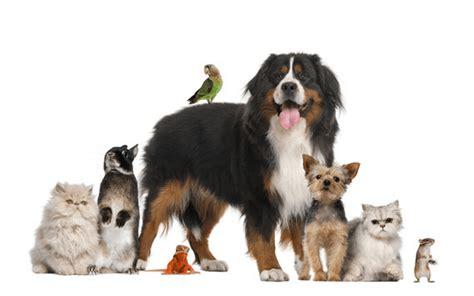 pets     pets bestthingscom