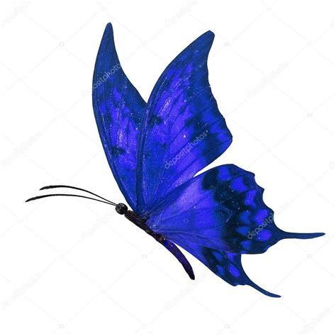 St 2in1 Pretty Blue blue butterfly flying stock photo 169 thawats 91371342