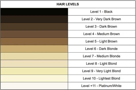 level 5 hair color an introduction to hair levels and tones finding your