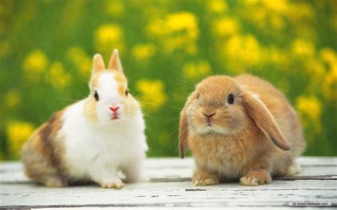 and rabbit bunny rabbits images bunnies hd wallpaper and background photos 16437984