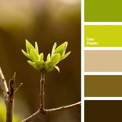 Lime Green Kitchen Ideas shades of green and brown color palette ideas