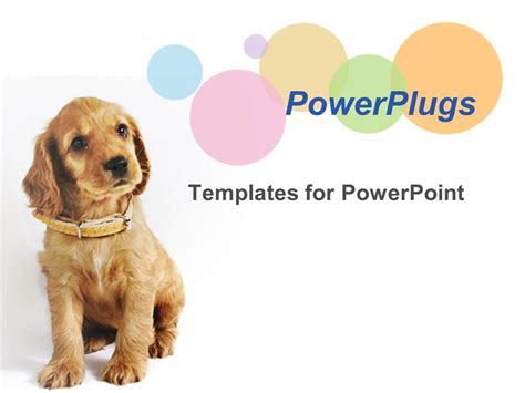 powerpoint template a dog wearig an brown belt sitting in