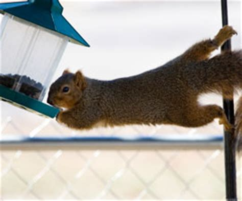 bird feeder squirrel proof yeah right qrz forums