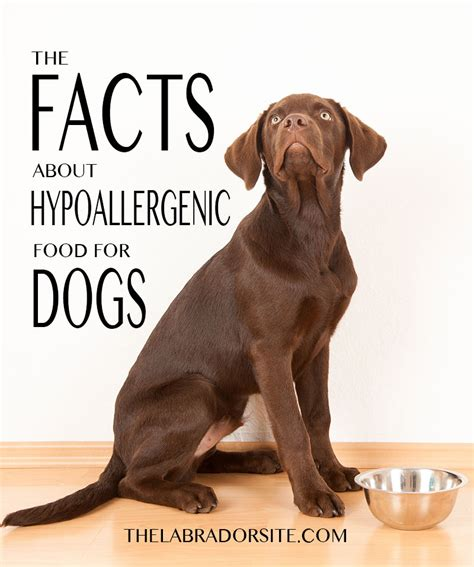 how are dogs considered puppies hypoallergenic food how does it work and which to buy the labrador site