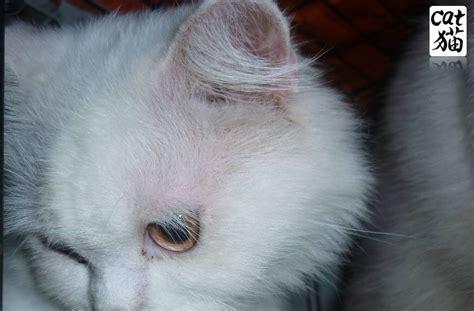 Kucing Lina kucing utara jenis ubat cacing untuk kucing