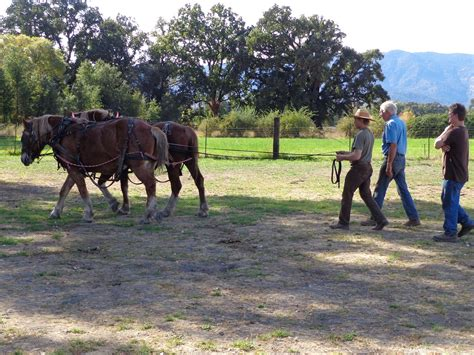 harness lessons with doc hammill friends books workhorse workshop at live power community farm doc