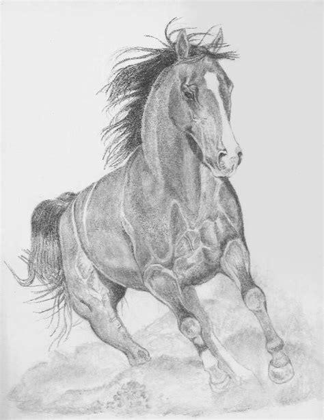 blanco y negro pintura lineal dibujar caballo ilustraci 243 n dibujos a l 225 piz caballos dibujos a lapiz