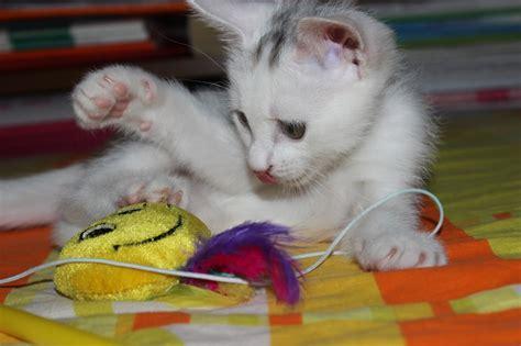 katzenspielzeug selber machen  gute ideen chip