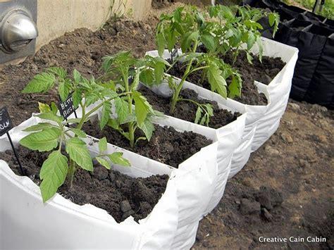 vegetable garden in a bag garden gardens