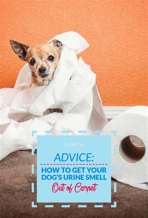 how to get a smell out of a room what get dog urine smell out of carpet