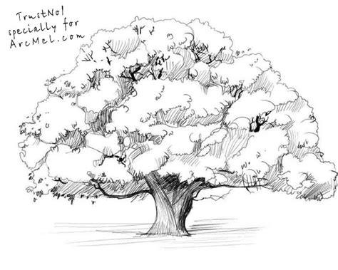 oak tree drawing acorn tree drawing www pixshark com images galleries
