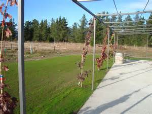Training Grape Vines Pergola by The Field Of Gold Growing Shade Vines On The Pergola