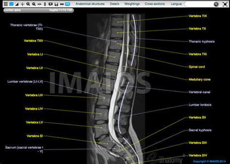 section of the spine that corresponds to the lower back anatomy image organs mri spine anatomy ppt lumbar