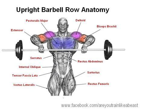 Grip United Grip Anatomy upright barbell row anatomy anatomy upright barbell row and barbell row