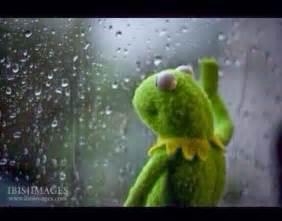 Kermit The Frog Meme Generator - kermit window meme generator
