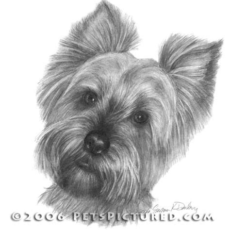 how to draw a yorkie puppy terrier portrait original pencil drawing prints apparel gifts pencil