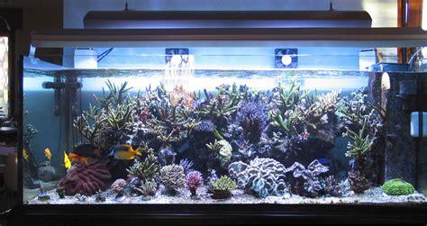 acquario casa mobili per acquari design casa creativa e mobili ispiratori