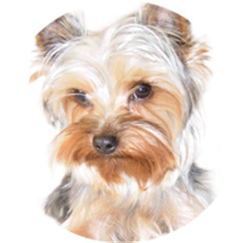 dogs analysis glands mammary gland tumors hasting veterinary hospital
