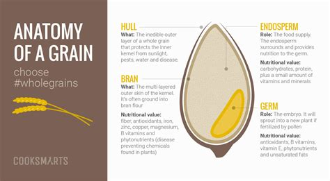 whole grains meaning in guide to whole grains cook smarts