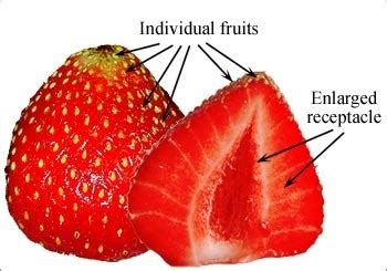 3 fruits with seeds on outside which fruits develop seeds on the outside quora