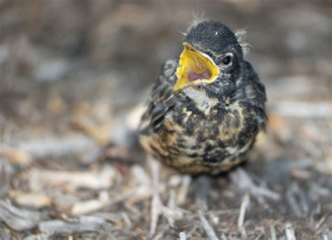 how to care for a lost baby bird petmd