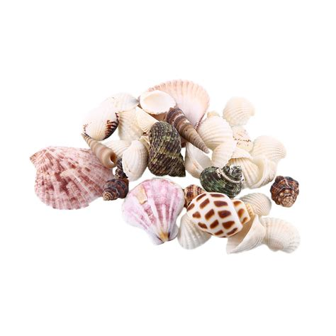 crafts with shells for popular seashell crafts buy cheap seashell crafts lots