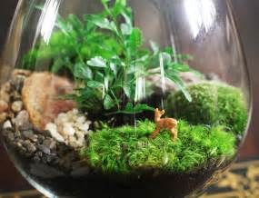 DIY Terrarium T together with How To Make A Terrarium In A Small Bowl