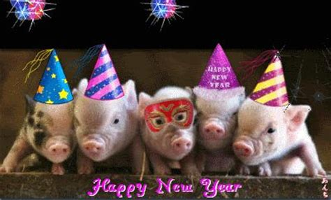 new year for the pig happy new year happy new year pigs