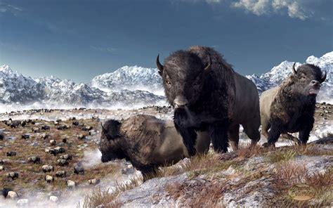 amerikanischer herd american bison herd www imgkid the image kid has it