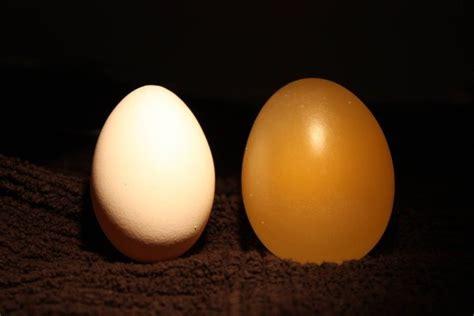 el huevo the egg peque 241 o experimento con un huevo y vinagre hazlo tu mismo