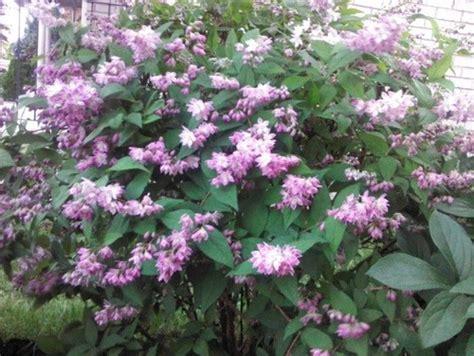 flowering shrub identification 28 flowering shrub identification help flowers need