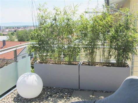 Pflanzen Auf Balkon by Balkon Sichtschutz Pflanzen