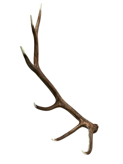 Elk Antler Shed by Shed Antler Deer Elk And Moose Antler Sheds For Sale