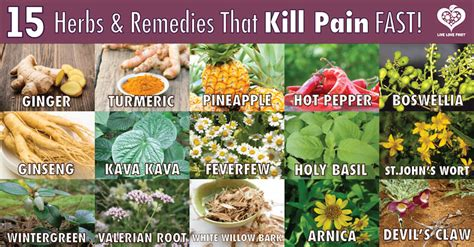 best medicine for inflammation 15 potent herbs and remedies that kill pain fast