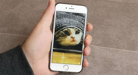 gif live wallpaper iphone iphone 6s how to make your own custom live photo