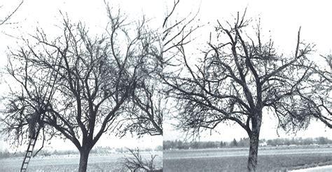 obstbaumschnitt wann baumschnitt apfel gutshaus hermannshagen archive