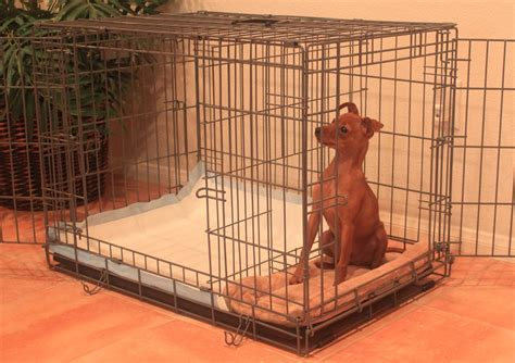 house training my dog miniature pinscher puppies how to potty train a miniature