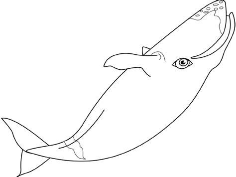 Dessin De Baleines A Imprimer Coloriage De Baleine L