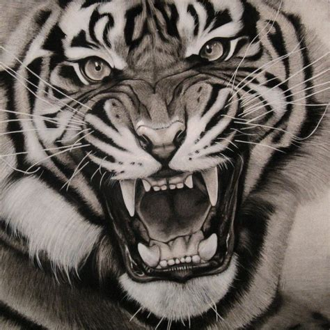 white tiger tattoo queenstown reviews tattoo tiger designs the best tiger of 2018